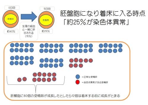 受精卵と染色体異常との関連性のイラスト3