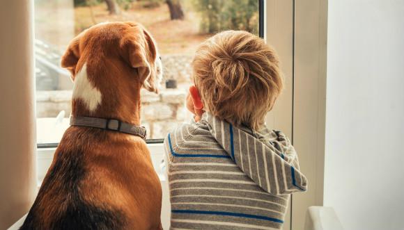 犬を飼う子供