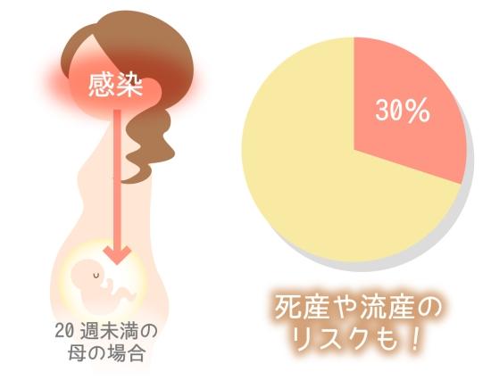 りんご病の赤ちゃんへの感染率0629-1