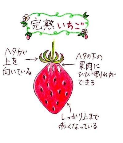 identigying of Strawberry