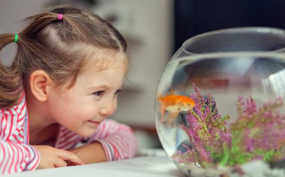 お祭りで釣ってきた金魚を楽しそうに見ている子供