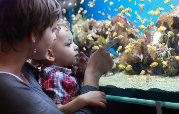 水族館に親子で楽しんでいる様子