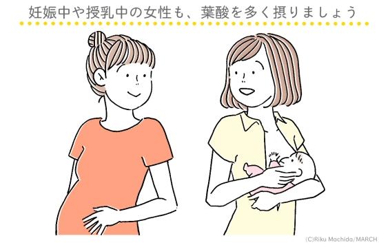 妊娠中・授乳中は葉酸を多く取りましょう