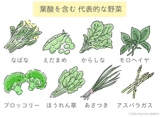 葉酸を含む野菜