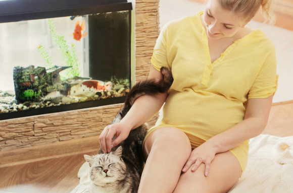 ペットを飼っている妊婦さん