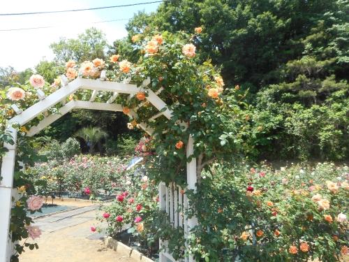 生田緑地公園の景色画像20