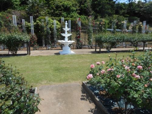 生田緑地公園の景色画像23