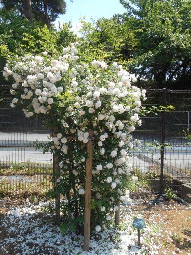 生田緑地公園の景色画像25