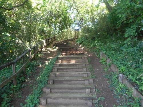 生田緑地公園の景色画像15
