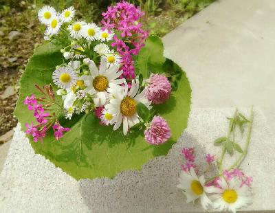 flowers-play84562-6
