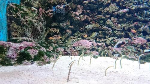 aquarium-of-nishiki-chitin-conger68865-5