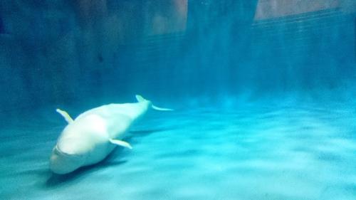 white-dolphin68865-3
