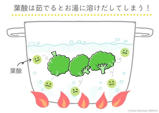 茹でると葉酸はお湯に溶け出してしまう