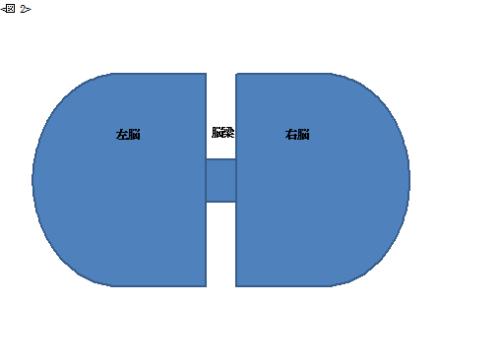 右脳と左脳の図