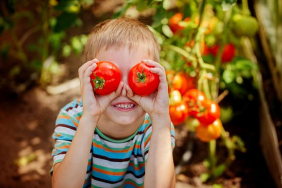 トマトを栽培して嫌いを克服しようとしている子供