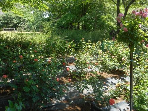 生田緑地公園の景色画像16