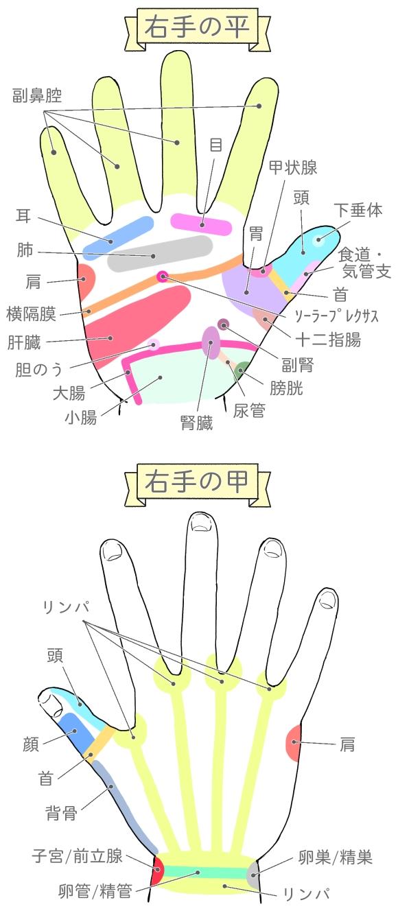 右手の平と甲の反射区の説明イラスト