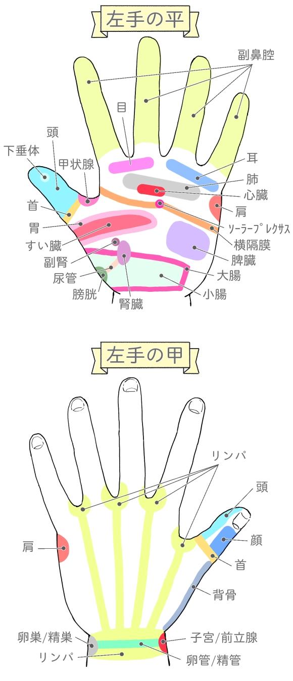 左手の平と甲の反射区の説明イラスト