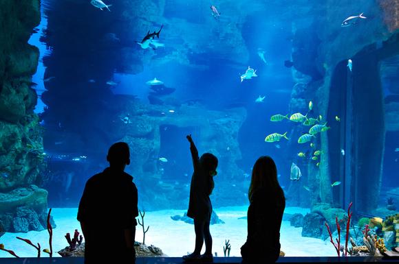 水族館に家族で訪れている様子